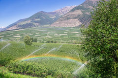Rainbow above Watering with Sprinklers of Apple Tree Plantation, Italy. Europe Royalty Free Stock Photos