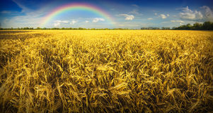 Rainbow above the wheat field Royalty Free Stock Photography