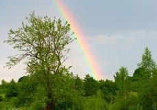 Rainbow against a blue sky after rain Stock Photos