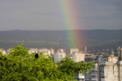 Rainbow, amazing view after rain and a craw. Rainbow, amazing view after rain Royalty Free Stock Images