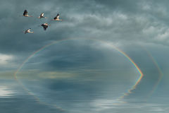 Rainbow And Cranes Stock Images