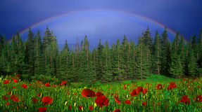 Rainbow-arc. A Rainbow-arc after a thundershower got up above the forests and fields Royalty Free Stock Photo