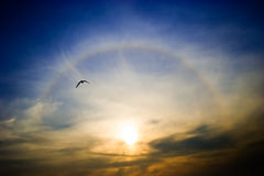 Rainbow around the sun. Circular rainbow around the setting sun flying seagull Royalty Free Stock Photo
