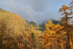 Rainbow and autumn colors of the forest. In the mountains, the light after the storm Royalty Free Stock Photo