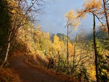 Rainbow and autumn colors of the forest. In the mountains, the light after the storm Stock Images