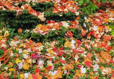 Rainbow Autumn leaves cover the landscape Royalty Free Stock Images