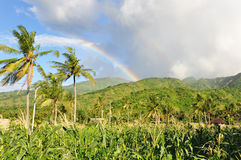 Rainbow in bali landscape. Rainbow in a rice field in amed village bali Royalty Free Stock Photo