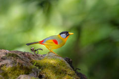 Rainbow birds Stock Images