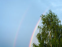 A rainbow. Bright colorful rainbow in the blue sky after rain Royalty Free Stock Image