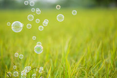 The rainbow bubbles Royalty Free Stock Photography