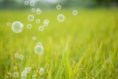 The rainbow bubbles Royalty Free Stock Photography