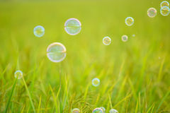 The rainbow bubbles Stock Photos