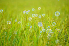 The rainbow bubbles Stock Images