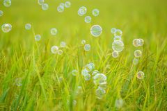 The rainbow bubbles Royalty Free Stock Images