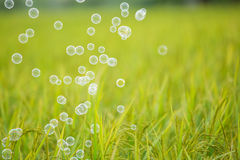 The rainbow bubbles Stock Photography