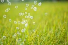 The rainbow bubbles Stock Photography