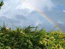 Rainbow bush. A rainbow over a bush Stock Images
