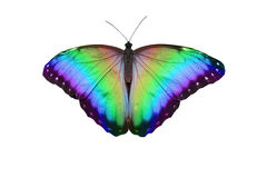Rainbow Butterfly. Open butterfly with large wing span showing graduated rainbow colours isolated on a white background stock image
