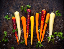 Rainbow carrot. Raw rainbow carrot for roasting, on a baking tray Royalty Free Stock Photos