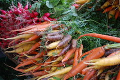 Rainbow carrots. Bunches of fresh rainbow carrots and radishes for sale in the outdoor market Royalty Free Stock Photos