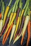 Rainbow carrots Royalty Free Stock Photography