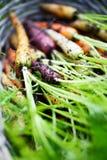 Rainbow carrots Royalty Free Stock Image