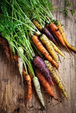 Rainbow carrots Stock Photography
