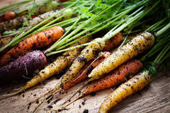 Rainbow carrots Royalty Free Stock Photos
