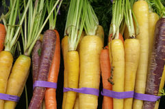 Rainbow Carrots. At a produce stand Royalty Free Stock Image