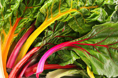 Rainbow chard Royalty Free Stock Image
