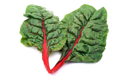 Rainbow chard Royalty Free Stock Photo