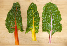 Rainbow chard leaves. Royalty Free Stock Images