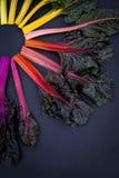 Rainbow Chard Royalty Free Stock Photos