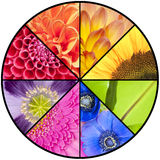 Rainbow collage of flowers in circular frame Royalty Free Stock Image