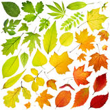 Tree leaves. Rainbow collection of tree leaves isolated on white background royalty free stock photo