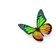 Rainbow Color Butterfly. On White Background. Soft shadow underneath royalty free stock images