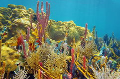 Rainbow of color under sea with corals and sponges Royalty Free Stock Photos