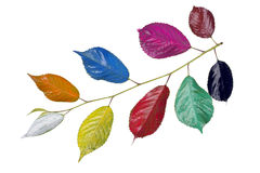 Rainbow colored branch Stock Images