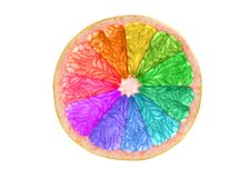 Rainbow colored citrus slice isolated on white. Background Stock Images
