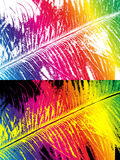 Rainbow colored feather Royalty Free Stock Image