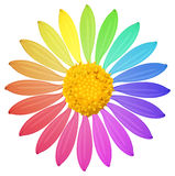 A rainbow colored flower Royalty Free Stock Images
