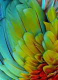 Rainbow-Colored Macaw Feathers Royalty Free Stock Photo