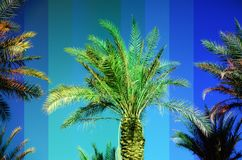 Rainbow colored palm trees on sky background. Fantastic toned photo light leaks. Tropical, exotic vacation. Creative. Banner. Summer travel concept stock photo