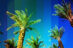 Rainbow colored palm trees on sky background. Fantastic toned photo light leaks. Tropical, exotic vacation. Creative. Banner. Summer travel concept stock image
