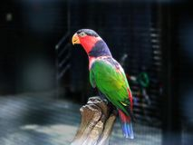 Rainbow colored parrot stock images