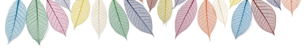 Rainbow colored skeleton leaves banner Royalty Free Stock Image