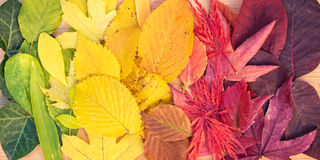 Rainbow of colorful autumnal leaves Royalty Free Stock Photography