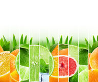 Rainbow colorful citrus fruits stripe collection on the white ba Stock Images
