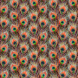 Rainbow colorful peacock bird feather seamless pattern background texture Royalty Free Stock Images
