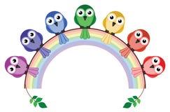 Rainbow colour birds Stock Photography